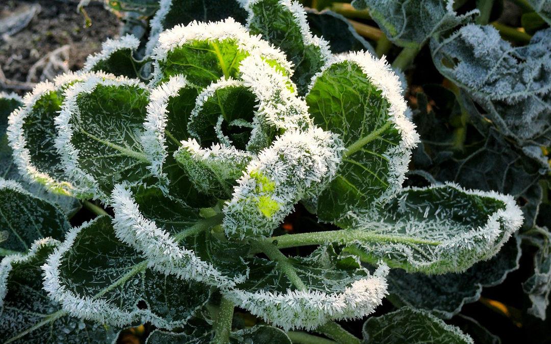 Vegan meal plan template - Winter produce