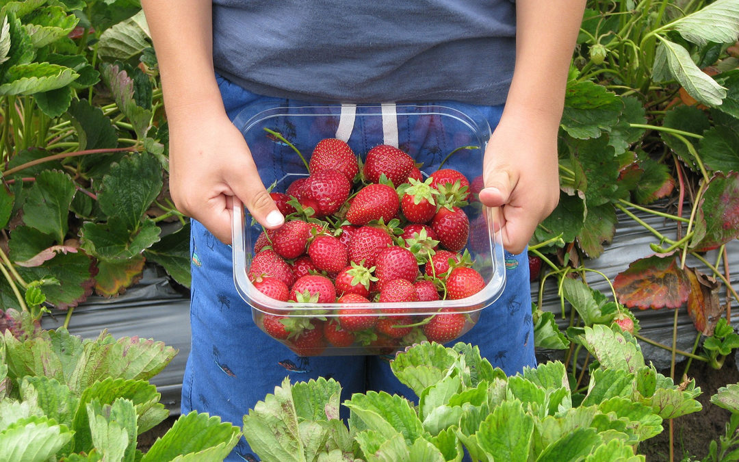 Fun food things to do with kids this summer - Child picking strawberries