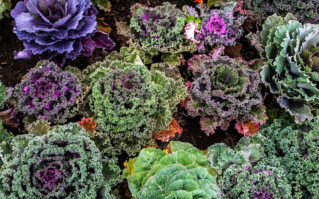 How to eat more greens and cruciferous vegetables