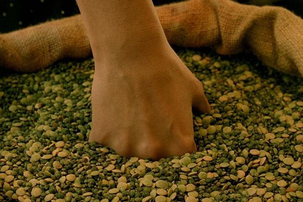 Zero-waste cooking for vegans - Amelie Poulain digging into a bag of green lentils
