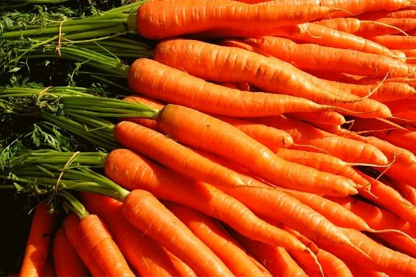 Vegan grocery list - Vegetables - Carrots